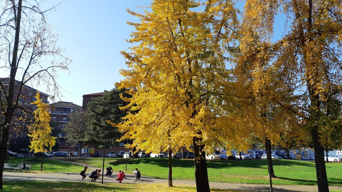 Foliage, ecco dove assistere a questo spettacolo della natura stando a Milano e in lockdown